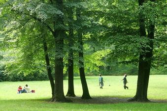 Baumfällungen im Waldpark Blasewitz