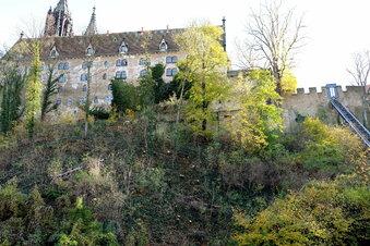 Pilzbefall unterhalb der Albrechtsburg