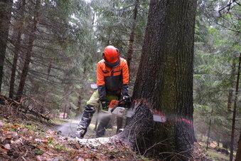Bäume für die ganz Anspruchsvollen