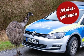 Polizei fängt entlaufenen Emu ein