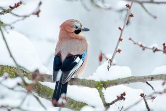 Wer flattert durch den winterlichen Garten?