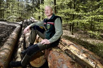 Wo landet das Holz aus der Dresdner Heide?