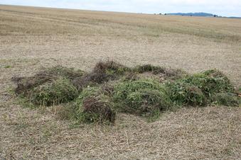 Illegale Gartenabfälle auf Reinholdshainer Felder