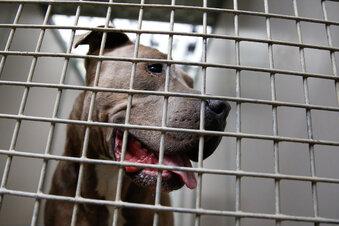 Hundeangriff ruft Tierschützer auf den Plan