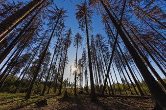 Ein Rettungspaket für Sachsens Wald