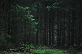 Totalverlust droht im Wald