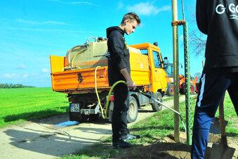 Hilferuf nach Baumpaten