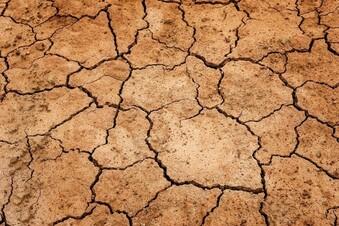 Bauern in Sachsen leiden immer mehr unter der Trockenheit