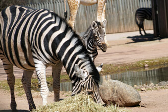 Forderung: Dresdner Zoo wieder öffnen