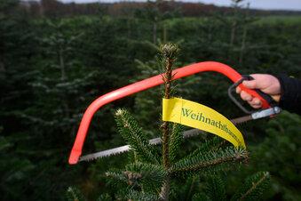 Weihnachtsbäume könnten teurer werden