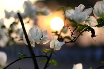 Praktische Beleuchtung für Garten und Terrasse
