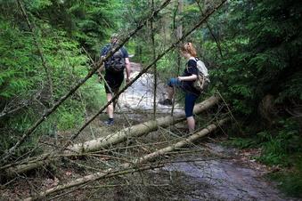 Elbsandstein: Sturm fegt Bäume weg