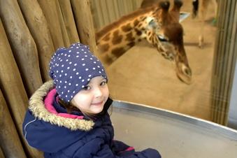 Dresdner Zoo: Zurück bei Giraffe, Esel & Co.