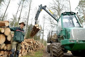 Dresdner Heide: Schweres Gerät auf Waldwegen