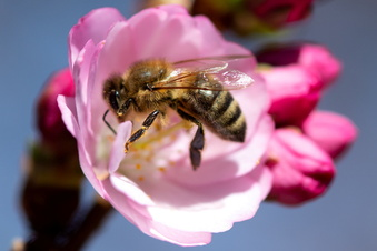 Zeigt her eure Bienen!
