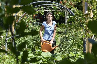 Rechte Übergriffe auf Gärtner in Prohlis