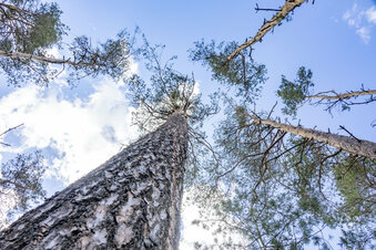Waldbrand-Schwerpunkt Gohrischheide
