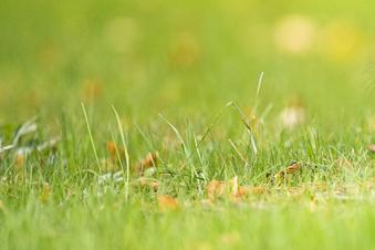 Teuerstes Stück Rasen gibt es in Leipzig