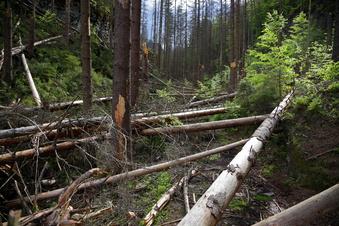 Wer löst den Wegestreit im Nationalpark?