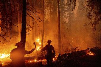 """""""Historische"""" Brände wüten in Kalifornien"""