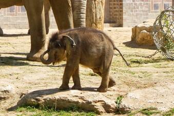 Wie soll der Minifant heißen?