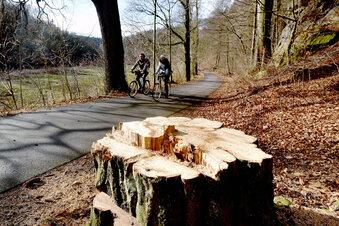 Der Klosterwald wird abgeholzt
