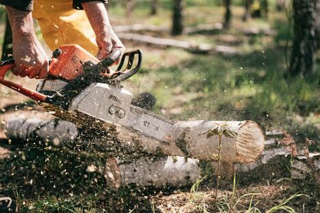Vermieter muss Holzfäller selbst bezahlen