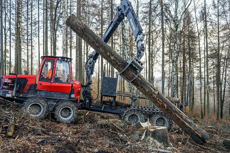 Mann bei Waldarbeiten am Picho verletzt