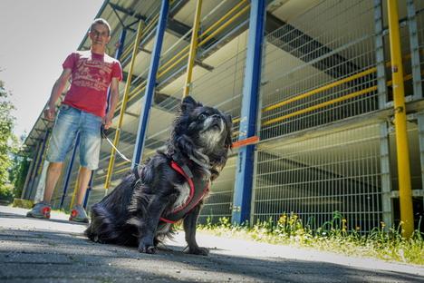 Bautzen: Gefährliche Hundeköder in Bautzen gefunden