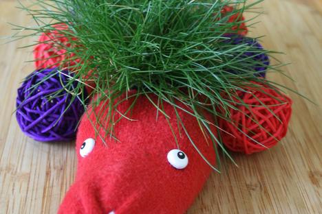 Lustiges Grassockentier