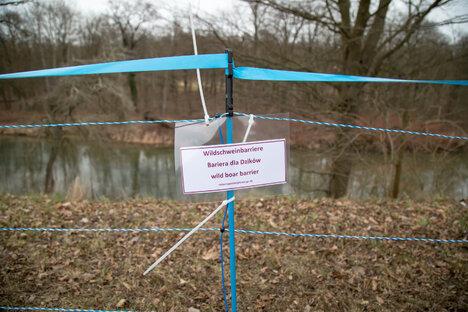 Zweiter Schweinepestfall im Kreis Görlitz?