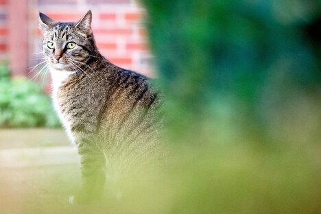 Hausarrest für Dresdner Katzen?