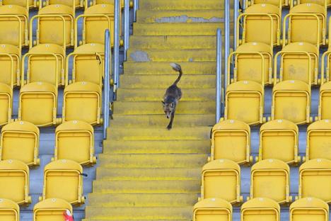 Dynamo: Dürfen Dynamo-Fans am Samstag ins Stadion?