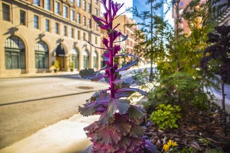 Grüne Städte: Möglichkeiten für mehr Natur