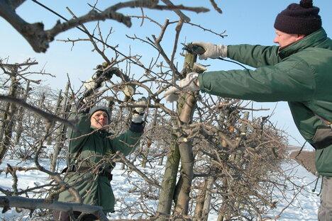 Nur scheinbar Winterschlaf in Obstplantagen