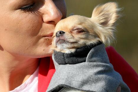 Bischofswerda erhöht Hundesteuer