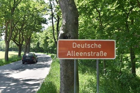 Dippoldiswalde: Dippoldiswalde: Neue Bäume für Alleenstraße