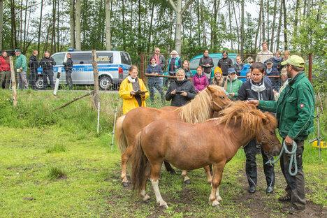 Versteigerte Pferde bleiben bei neuen Besitzern