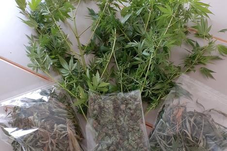 Döbeln: Polizei findet Cannabispflanzen in Mittweida