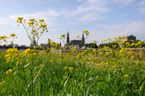 Dresden: Corona in Dresden: Mehr neue Infektionen