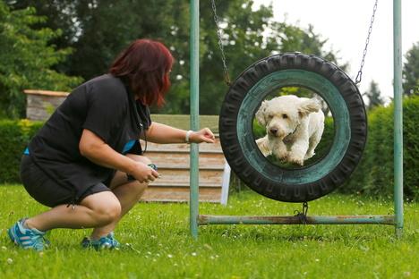Nach dem Lockdown: Neustart bei den Kamenzer Hundefreunden