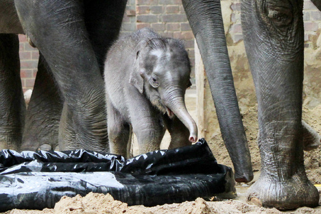 Wie soll Leipzigs Elefant heißen?