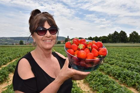 Freital: Die Erdbeersaison geht los