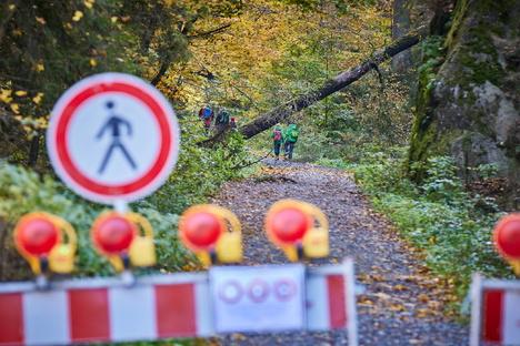 Der Wald im Nationalpark bleibt gesperrt