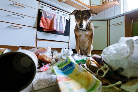 Smart Home fürs Haustier