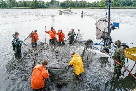 Lausitzer Fischwochen starten