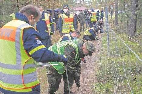 Neuer fester Zaun contra Schweinepest