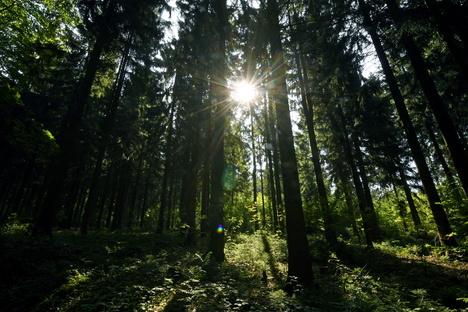 Sachsens Agrarminister will mehr Geld für den Wald