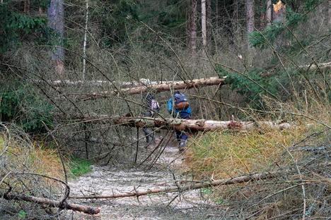 Pirna: Nach dem Sturm: Wanderer riskieren ihr Leben