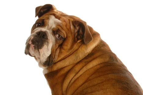 Leben und Stil: Ach, du dicker Hund